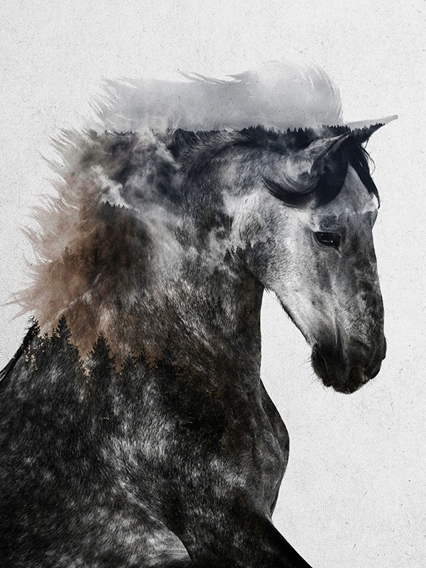 horses andreas lie
